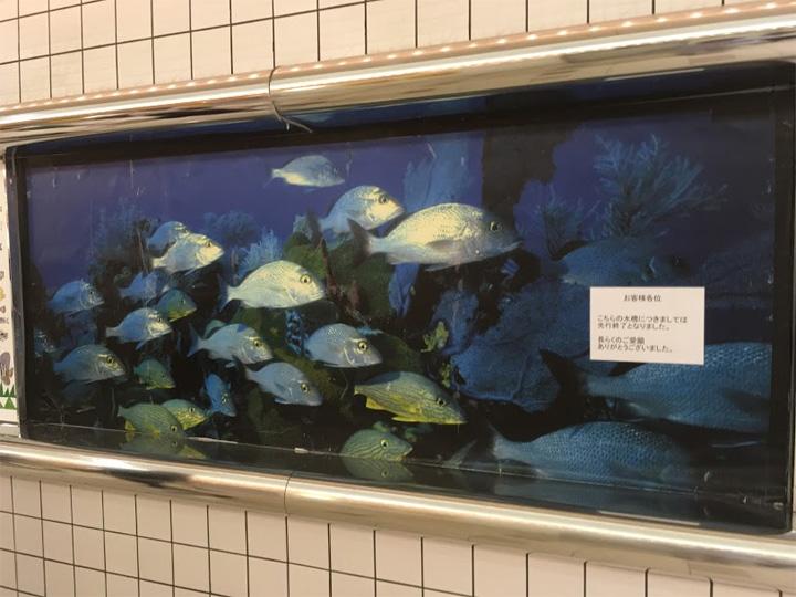 阪急三番街の水族館